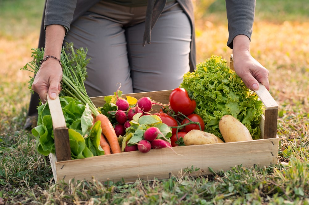 Pourquoi cultiver bio? cinq bonnes raisons