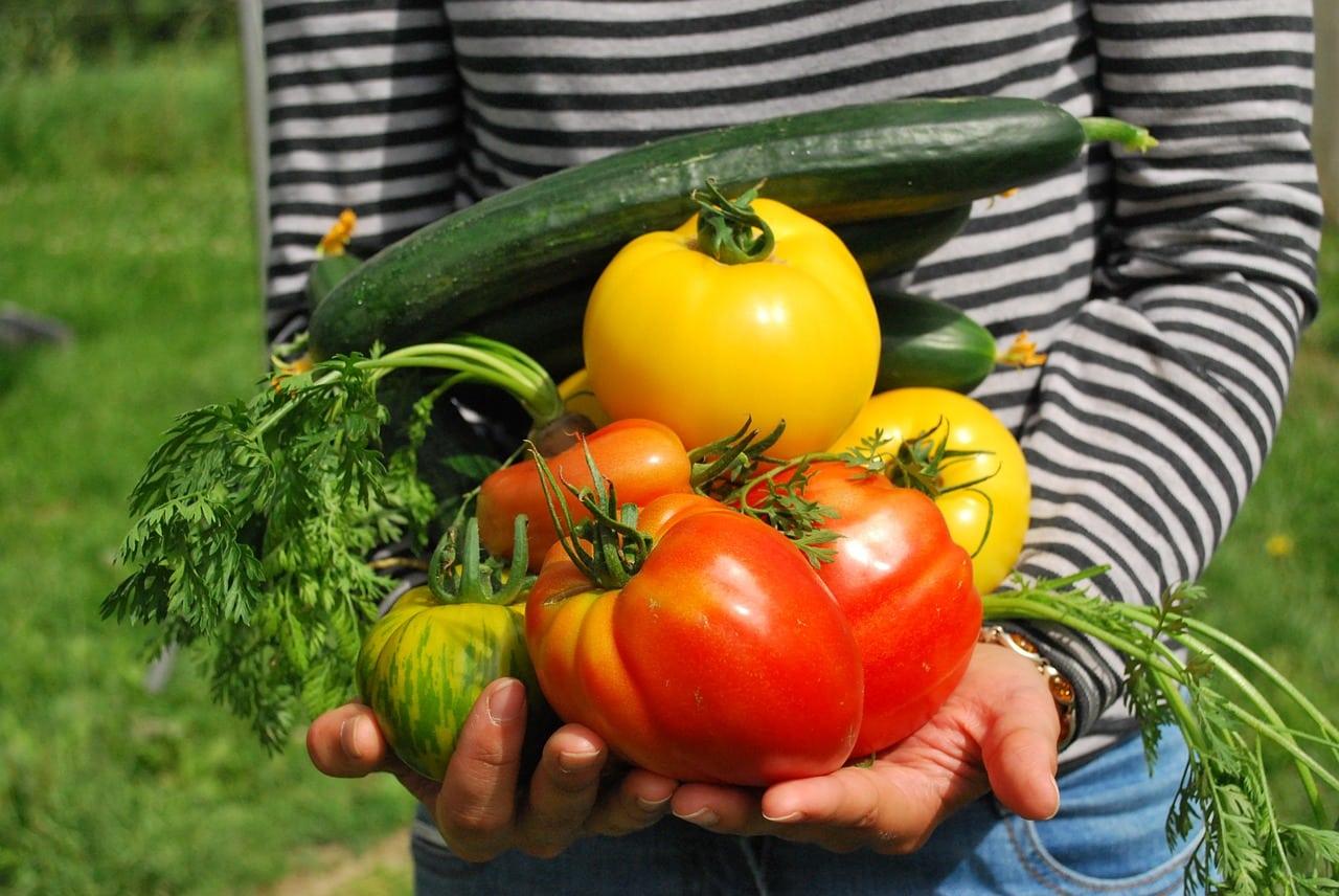 Comment jardiner bio?