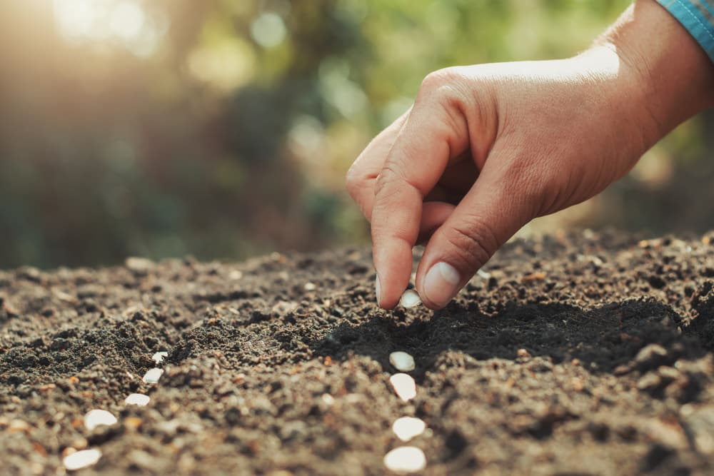 Les semences biologiques