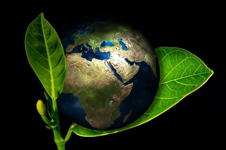 Les raisons de préférer le moringa oleifera bio