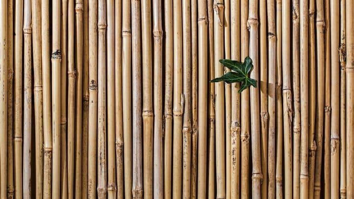 La paille en bambou, à la conquête du cœur des français
