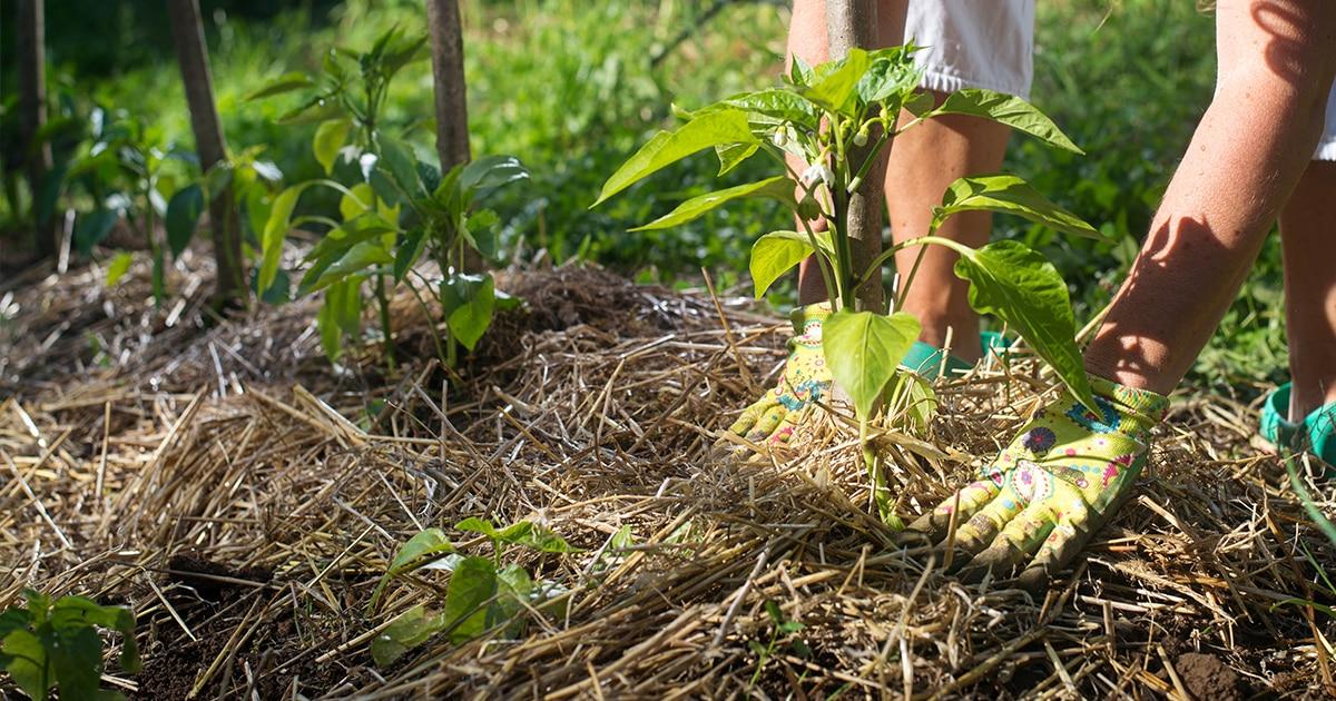 Démarrer un jardin en permaculture