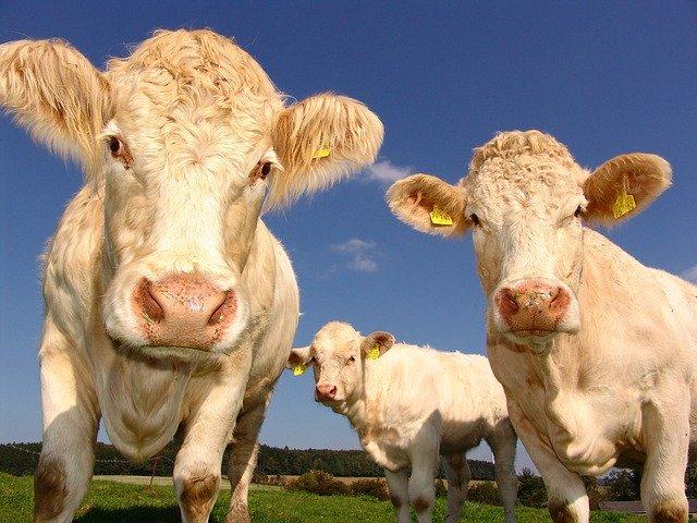 Qu'est-ce qui différencie une viande bio d'une viande normale ?